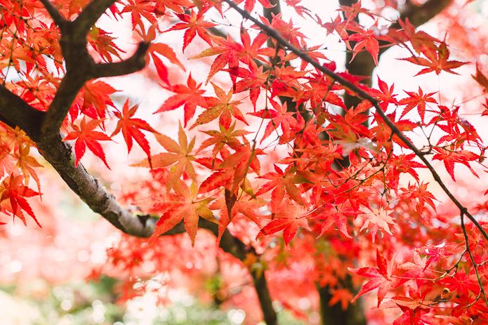 Fall Colors, Kyoto. Photo: © Noriko Nasu Tidball 2014.